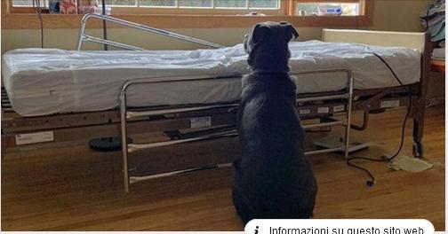 Cane attende per giorni il suo padrone morto accanto al letto di ospedale