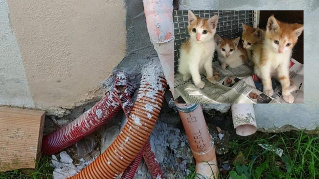 """Rossano Calabro: 7 gattini murati nel loro nascondiglio. """"Davano fastidio""""."""