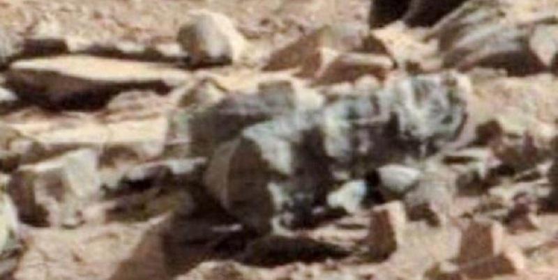 """""""Su Marte ci sono insetti e serpenti"""", l'entomologo mostra le prove (Foto)"""