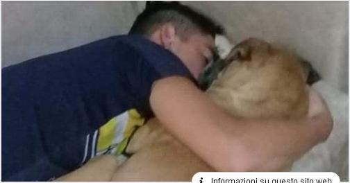 Cane muore d'infarto per colpa dei fuochi d'artificio