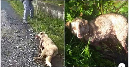 Picchia e spara al suo cane, poi lo trascina in strada: «Sono cacciatore, sparo a chi c…o mi pare»
