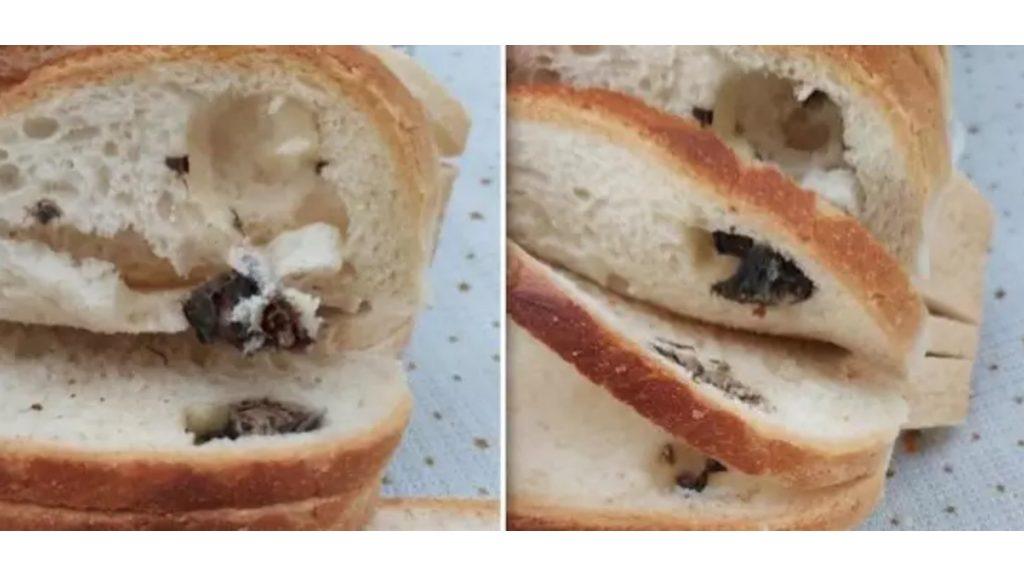 Donna in dolce attesa compra un panino dal distributore e ci trova un topo dentro