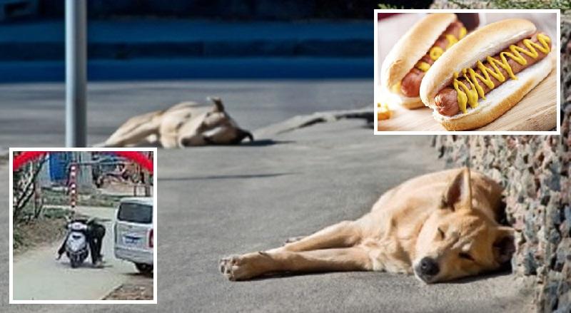 sleeping homeless dogs