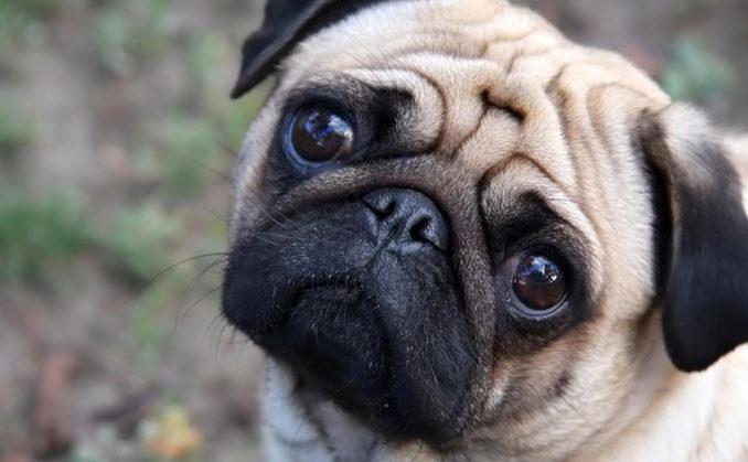 Non paga le tasse gli pignorano il cane per poi vederlo su eBay