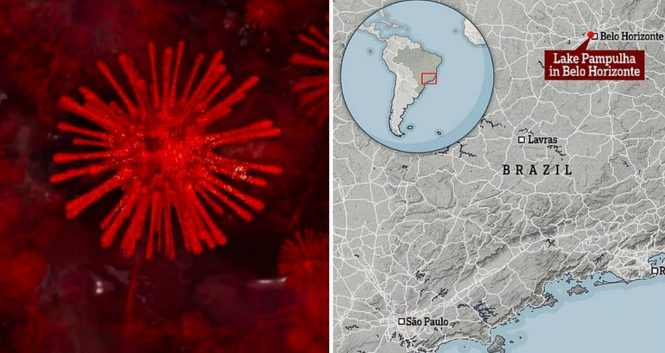 Una nuova minaccia arriva dal Brasile: Yaravirus. Ecco di cosa si tratta, sintomi e rischi che corre l'uomo.