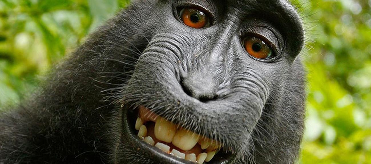 Le scimmie potrebbero parlare?